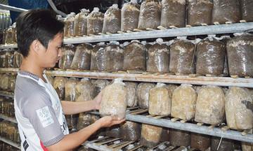 9X khởi nghiệp bằng HTX trồng nấm