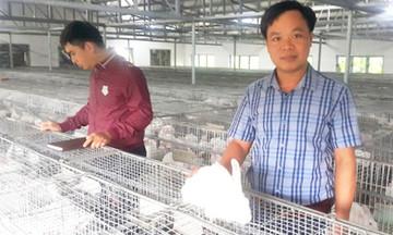 Bí quyết khởi nghiệp từ nuôi thỏ