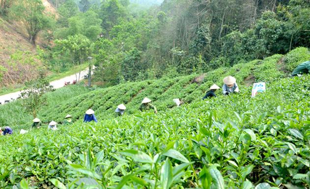 Son-Duong-Tuyen-Quang-HTX-la-d-6988-1126