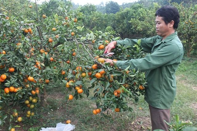 OCOP-Thanh-Hoa-7334-1586453539.jpg