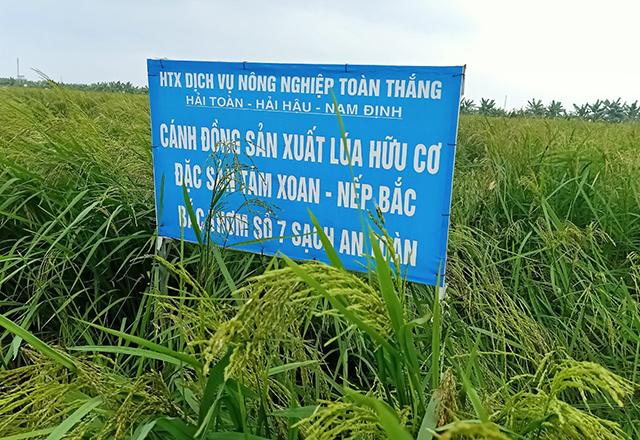Canh-dong-san-xuat-lua-huu-co-1652-4375-