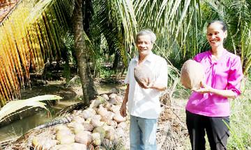 Bình Đại thúc đẩy xây dựng chuỗi giá trị dừa
