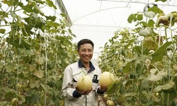 Chăm vườn dưa lưới 3ha bằng... Smartphone, thu hơn 1 tỷ/năm