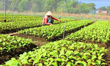 Vì sao bảo hiểm nông nghiệp chưa hấp dẫn nông dân?