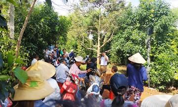 Triển vọng trồng xen cây ăn trái trong vườn cà phê ở Krông Năng