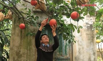 Những 'mùa đỏ' ở Đông Cao