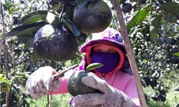 HTX Quảng Phú: Kết trái ngọt trên vùng sỏi đá