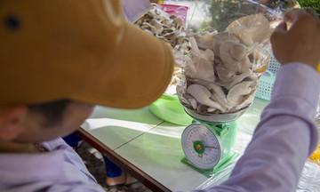 Mở cửa thị trường bằng sản phẩm nấm sạch
