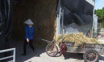 Hiệu quả từ sản xuất nấm trên cơ chất rơm ở HTX Bình Định