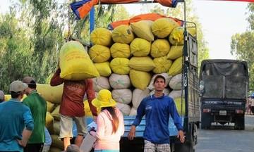 HTX Chợ Vàm: Lợi trăm bề từ sản xuất lúa 'sạch'