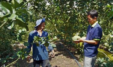 Chuyển đổi cơ cấu cây trồng ở Vĩnh Hưng mang lại lợi ích kép