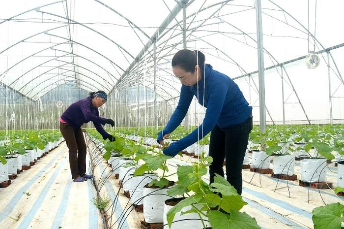 Dua-luoi-Quang-Tan-2-9651-1616474793.jpg