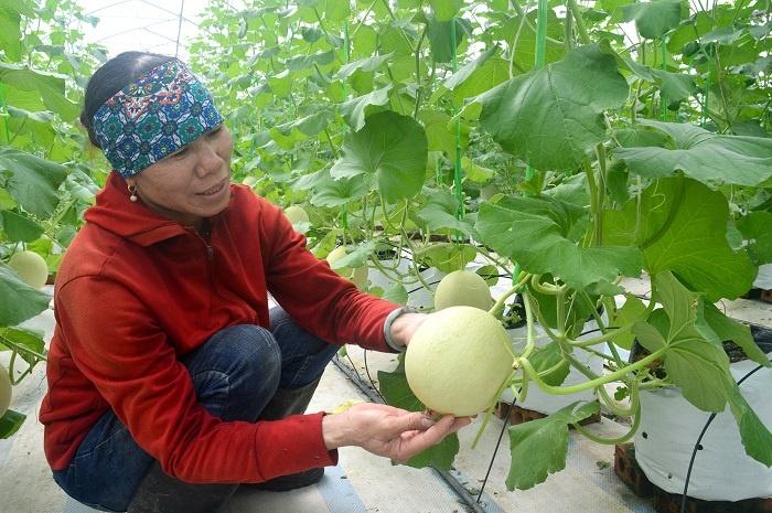 Dua-luoi-Quang-Tan-3-6731-1616474793.jpg