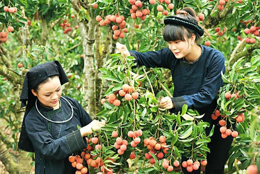 Chinh-sach-kinh-te-dan-toc-huy-8366-7982