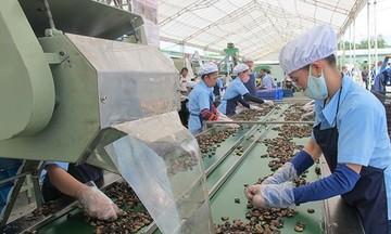 Lượng xuất khẩu hạt điều tăng 13,2%, kim ngạch giảm 5,8%