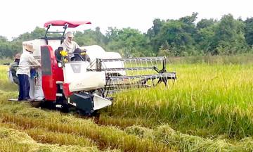 Hạ Hòa đánh thức tiềm năng nông nghiệp sạch