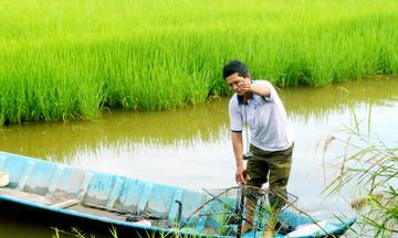 Hiệu quả từ mô hình nuôi tôm xen lúa ở Thới Bình