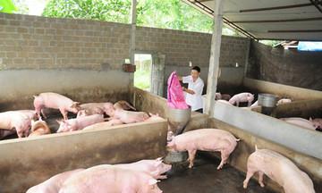 Tú Thịnh đẩy mạnh phát triển chăn nuôi hàng hóa
