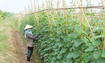 Kinh tế Sơn Dương thêm 'lực đẩy' từ trồng trọt hữu cơ