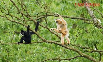 Bài 2: Từ thợ săn trở thành người bảo vệ muông thú
