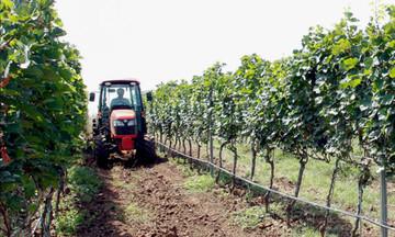 Sức bật mới từ chuyển đổi cơ cấu cây trồng ở Mỹ Sơn