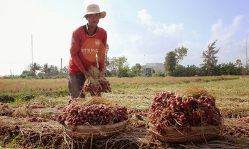 Hàng nhập siêu rẻ tràn vào, nông sản nội điêu đứng