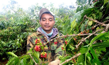 Thị trường nông sản ngày 20/4: Giá cà phê tăng nhẹ, tiêu 'đi ngang' phiên thứ 3 liên tiếp