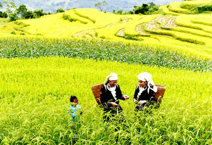 Khau-Tinh-nang-cao-hieu-qua-ch-5969-8911