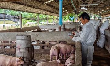 Thị trường nông sản ngày 22/4: Giá lợn hơi giảm, tiêu ổn định, cà phê tăng nhẹ