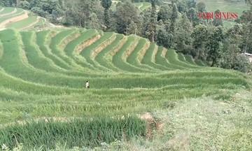 Người Cờ Lao vươn lên giữa núi rừng Hà Giang (Bài 3): Hướng đến phát triển bền vững