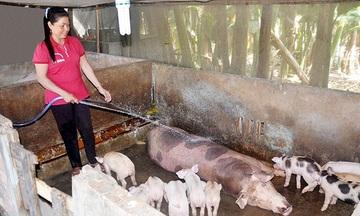Ánh sáng mới với đồng bào Khơme (Bài 1): Thay đổi sản xuất nông nghiệp để thoát nghèo