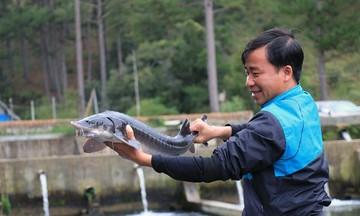HTX Cấm Sơn: Ấm no từ nuôi cá nước lạnh