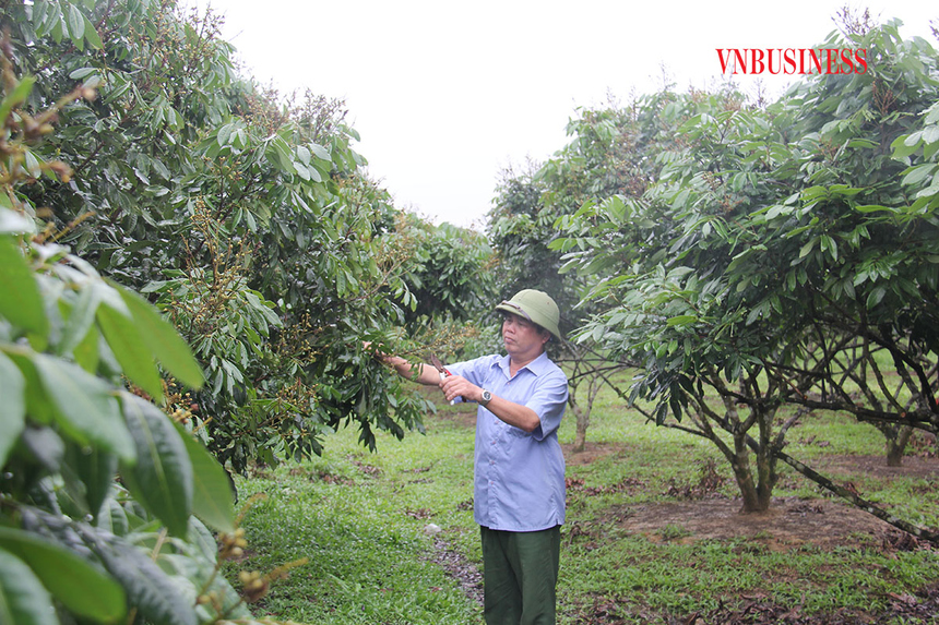 Ong-Bui-Van-Mien-Giam-doc-HTX-1449-3910-