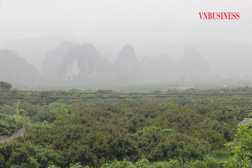 Vuon-nhan-cua-HTX-Son-Thuy-chu-4857-9741