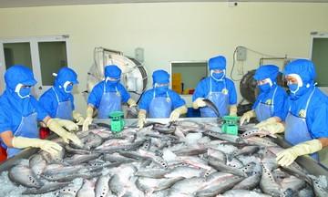 HTX Kỳ Như tăng lợi thế cạnh tranh từ chế biến cá thát lát