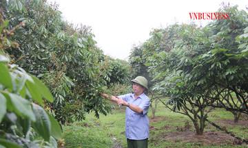 Nhãn Hương Chi mở hướng đi sản xuất nông sản bền vững cho HTX