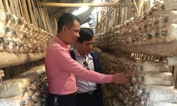 HTX Quang Trung: Trồng nấm hàng hóa đi đôi với bảo vệ môi trường