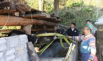 Nâng cao vị thế phụ nữ dân tộc thiểu số ở Hà Giang (Bài 1): 'Giỏi việc nước, đảm việc nhà'