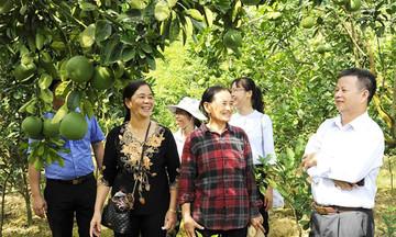 Đông Sơn đánh thức nông nghiệp sinh thái