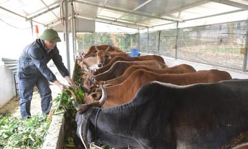 Hợp Thành phát triển chăn nuôi xanh
