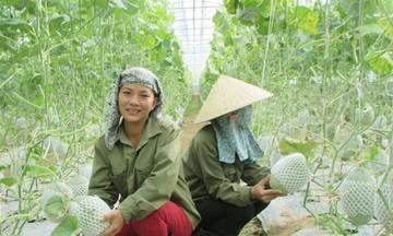 HTX Lương Tâm: Sản xuất xanh, bền vững theo hướng công nghệ cao