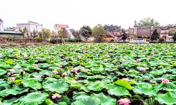 'Cửa sáng' cho nông nghiệp sinh thái ở Hồng Vân