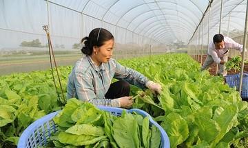 HTX Trung Nhứt: Gắn sản xuất với bảo vệ môi trường