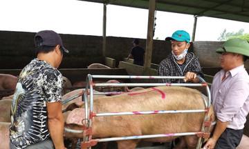 Thị trường nông sản ngày 13/5: Giá lợn hơi giảm 4.000 đồng/kg, giá cà phê quay đầu giảm theo giá thế giới
