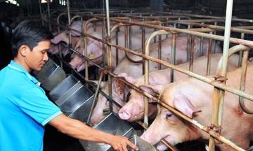 Dự báo giá thức ăn chăn nuôi giảm từ tháng 7/2021