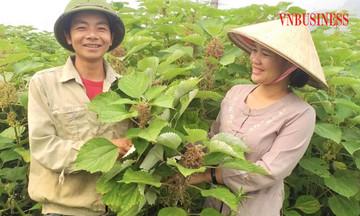 Phụ nữ dân tộc thiểu số tham gia chuỗi giá trị nông sản (Bài 3): Dệt ước mơ từ cây gai xanh