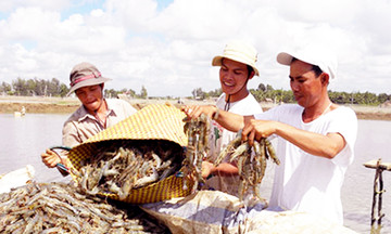Nông dân lãi đậm nhờ học nghề nuôi tôm hiện đại