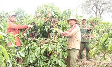 Đào tạo nghề nâng cao thu nhập ở Đắk Ang