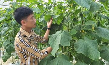 HTX Nông Thịnh thành công với nhà màng trồng dưa lưới
