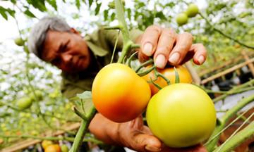 Nông nghiệp hiện đại trên vùng cao Yên Thái